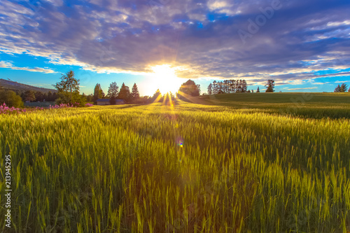 Canvas Lavendel Barley field view from Sotkamo, Finland.