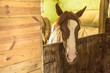 Horse in stable - 213952626