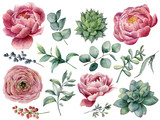 Watercolor peony, succulent and ranunculus floral set. Hand painted red and blue berry, eucalyptus leaves isolated on white background. Illustration for design, print. - 213956898