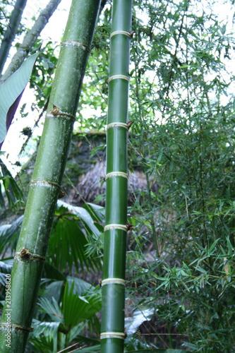 Canvas Bamboe bamboo