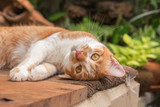Beautiful cat outdoors in the garden. - 213963487