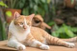 Beautiful cat outdoors in the garden. - 213963874