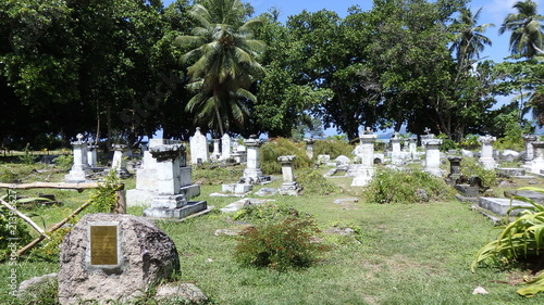 Fotobehang Olijf Seychellen-La Digue