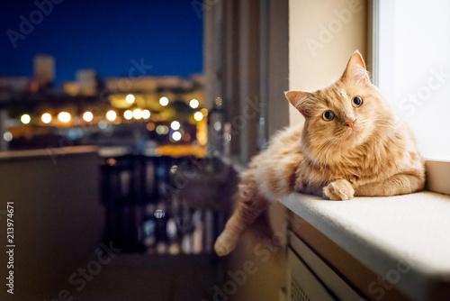 Foto Spatwand Kat Cat in the night
