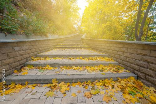 Foto Spatwand Honing Beautiful autumn in park