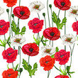Poppy flowers  seamless on white background,vector illustration