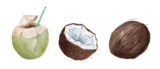 Coconut whole, half and drinking, watercolor © Евгения Савченко