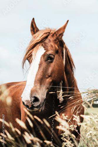 poney - 214098267