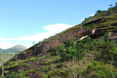 Panoramic view of vegetation in the middle of the forest in Brazil