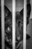 Portrait of abandoned dogs or cats in shelters in belgium - 214109444