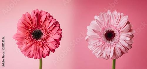 Foto Spatwand Gerbera Spring Flowers