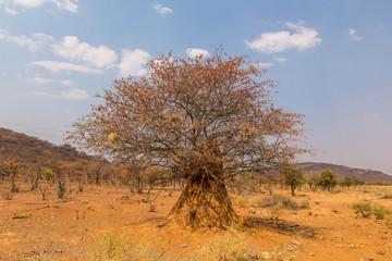 un arbre serti d'une termitière