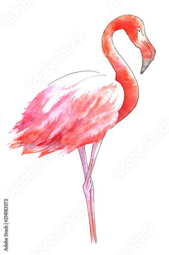 watercolor-painted-bird-the-greater-flamingo-in-color