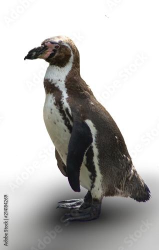 Fotobehang Pinguin Pinguin