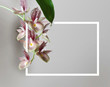 orchid white with red dots on a light background