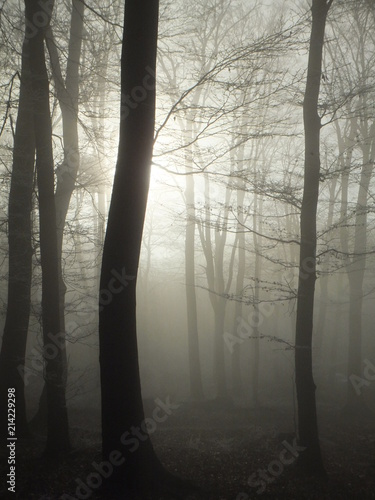 Forest bathed in fog, pale sun shining from behind a tree