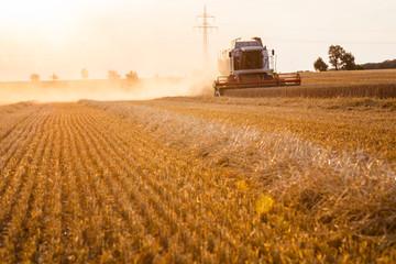 Ein Mähdrescher erntet Getreide in der Abendsonne