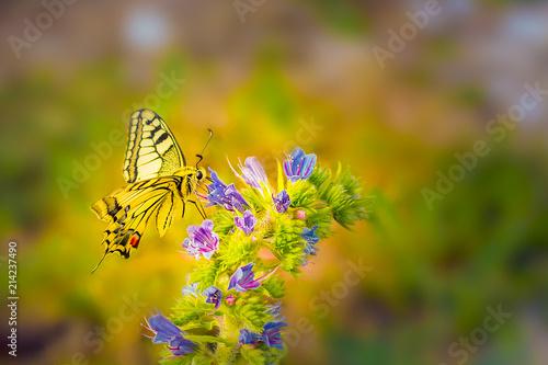 Leinwanddruck Bild Schmetterling auf einer Blume im Morgenlicht