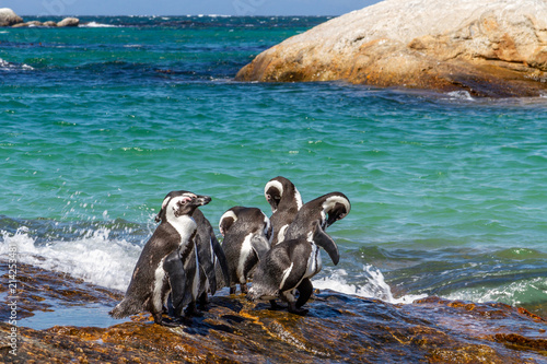 Fotobehang Pinguin African Penguins at Boulder's Beach along the Cape Peninsula