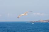 Bird in mediterranean sea
