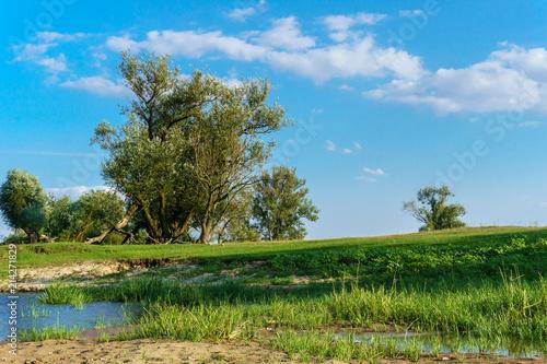Canvas Blauw Der Baum an der Oder