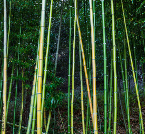 Canvas Bamboe Bamboo stocks