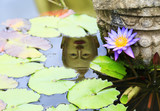 lotus and buddha refect on water