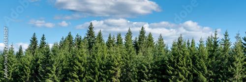 Wald und blauer Himmel Panorama - 214345057