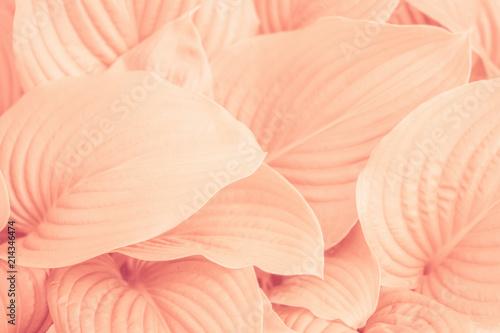 Liście roślin. Streszczenie pastelowy natura tło