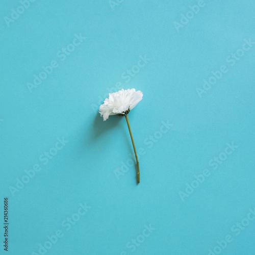 Foto Spatwand Paardenbloemen Spring Flowers