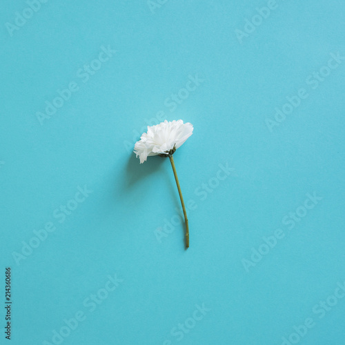 Canvas Paardenbloemen Spring Flowers