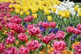 Blooming flowers in Spring - 214391420