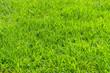 Early summer natural lawn - 初夏の天然芝 細部1