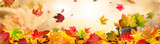Indian Summer Background - 214441062