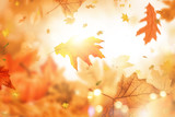 holiday indian summer leaves  - 214441283