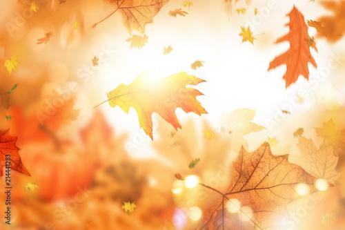 Leinwandbild Motiv holiday indian summer leaves