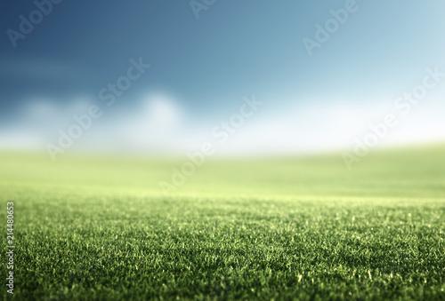 Canvas Lente field of spring grass (shallow DOF)