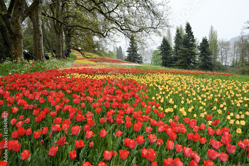 canvas print picture Farbenrächtige Kulisse auf der Insel Mainau am Bodensee, Colorful scenery on the island of Mainau on Lake Constance