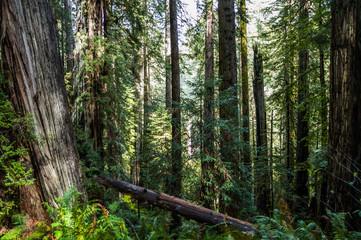 Redwood Nationalpark Pflanzenwelt © Raphael und Luisa