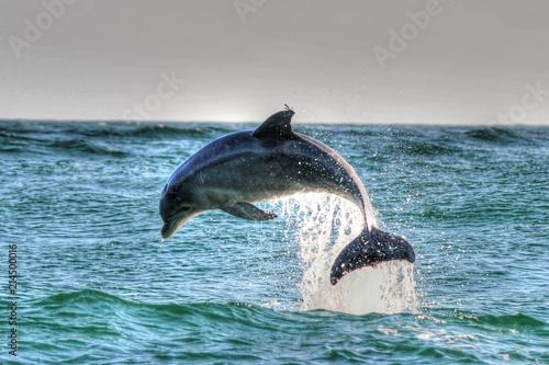 Foto Spatwand Dolfijn Dolphin in St Andrews St Park, Panama CIty Beach, Fl