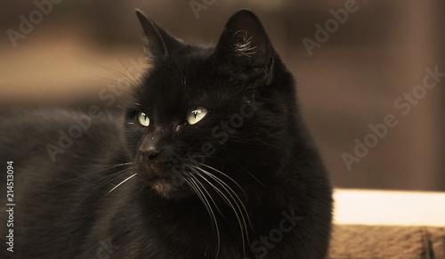 Foto Spatwand Panter black cat
