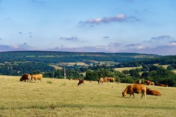 イギリスの牧場