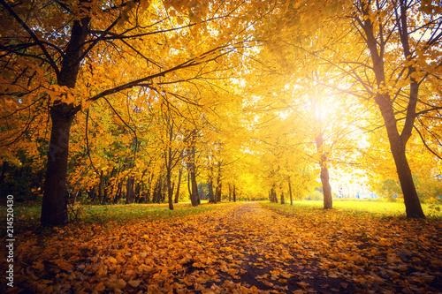 Fotobehang Herfst Autumn scene