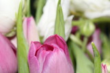 Tulpe - 214521635