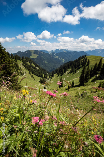 Panoramic view of beautiful landscape in the Alps with fresh green meadows and blooming flowers and snow-capped mountain tops in the background on a sunny day with blue sky and clouds in springtime