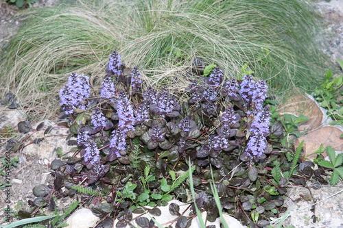 Canvas Lavendel en Charente
