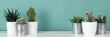 Leinwandbild Motiv Modern room decoration. Collection of various potted cactus house plants on white shelf against pastel turquoise colored wall. Cactus plants banner.