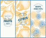 Orange fruit banner set. Hand drawn vector fruit illustration. Engraved style vintage citrus background.