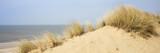 Dünenlandschaft, Sylt, Nordfriesische Insel, Nordfriesland, Schleswig-Holstein, Deutschland, Europa - 214561211
