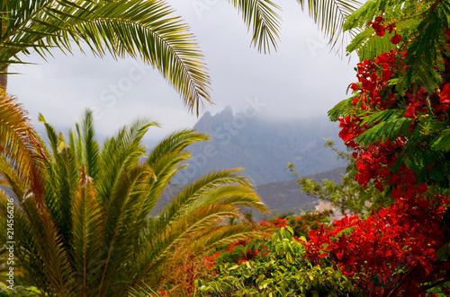 Fotobehang Canarische Eilanden Exotic tropical flora in Torviscas Alto,Tenerife,Canary Islands,Spain. Blooming Flamboyant and palm trees in the garden.Travel or vacation concept.